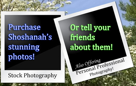Purchase Shoshanah's Beautiful Photographs