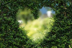 Heart cut out of a bush