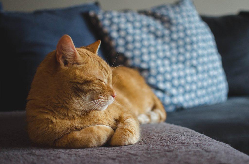 Cat Dosing Representing Calm